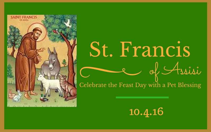 Bless Your Pets on the Feast of St  Francis of Assisi